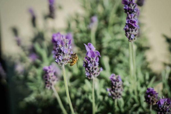 local honey redlands bayside